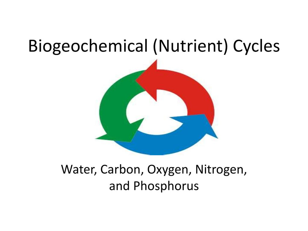 Biogeochemical (Nutrient) Cycles