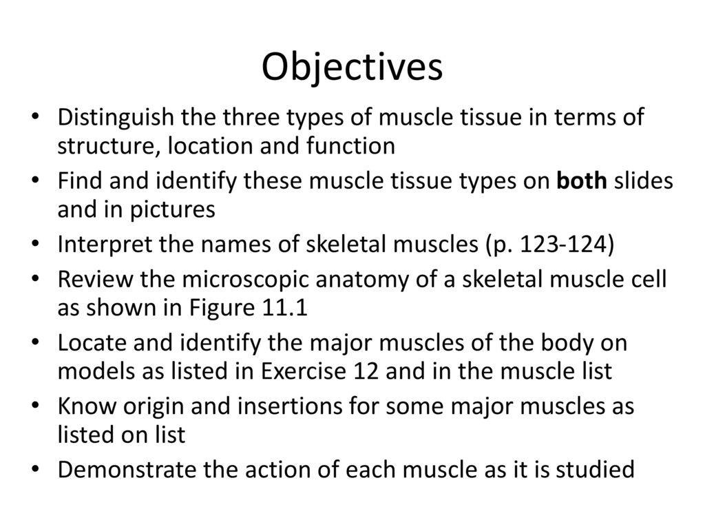 Fine Gross Anatomy Of The Skeletal Muscles Muscles Of The Head Mold ...