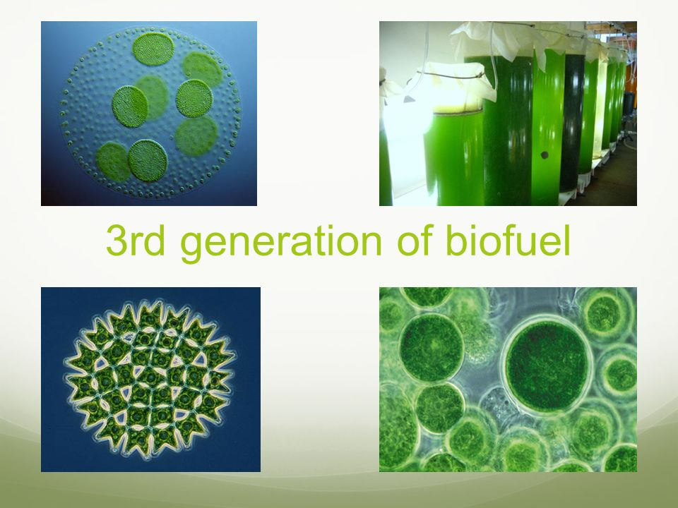 3rd generation of biofuel