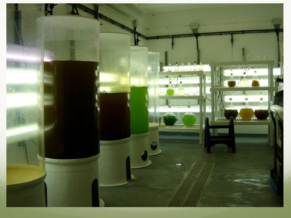 Usual culture Suspension in a photobioreactors Concentration: 0.1-1g/L