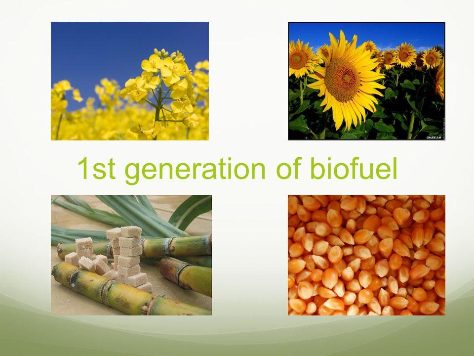 1st generation of biofuel