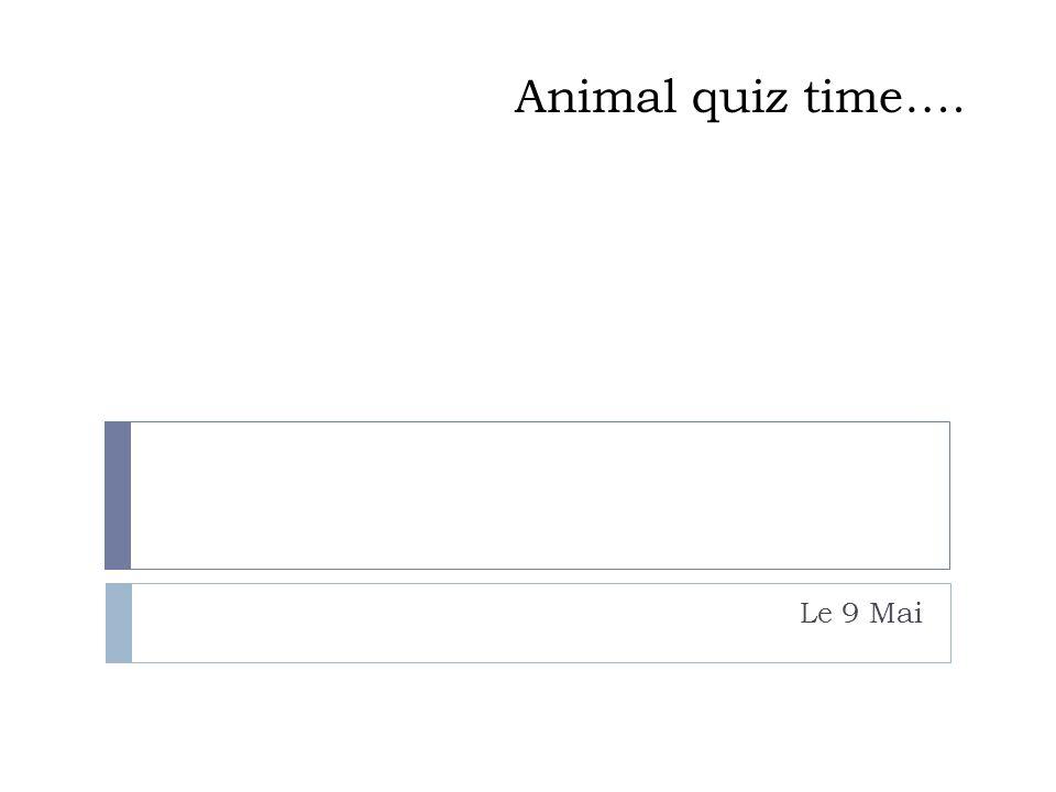 Animal quiz time…. Le 9 Mai