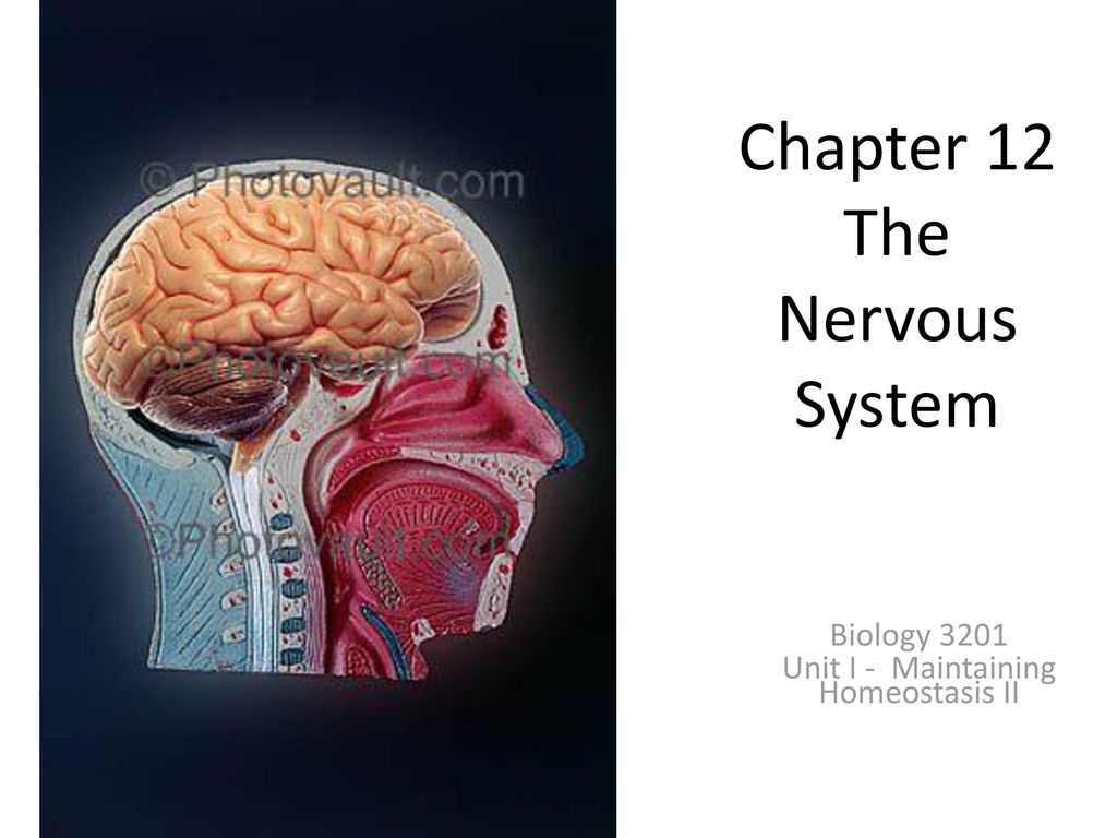 Fancy Anatomy And Physiology Coloring Workbook Answers Chapter 12 ...