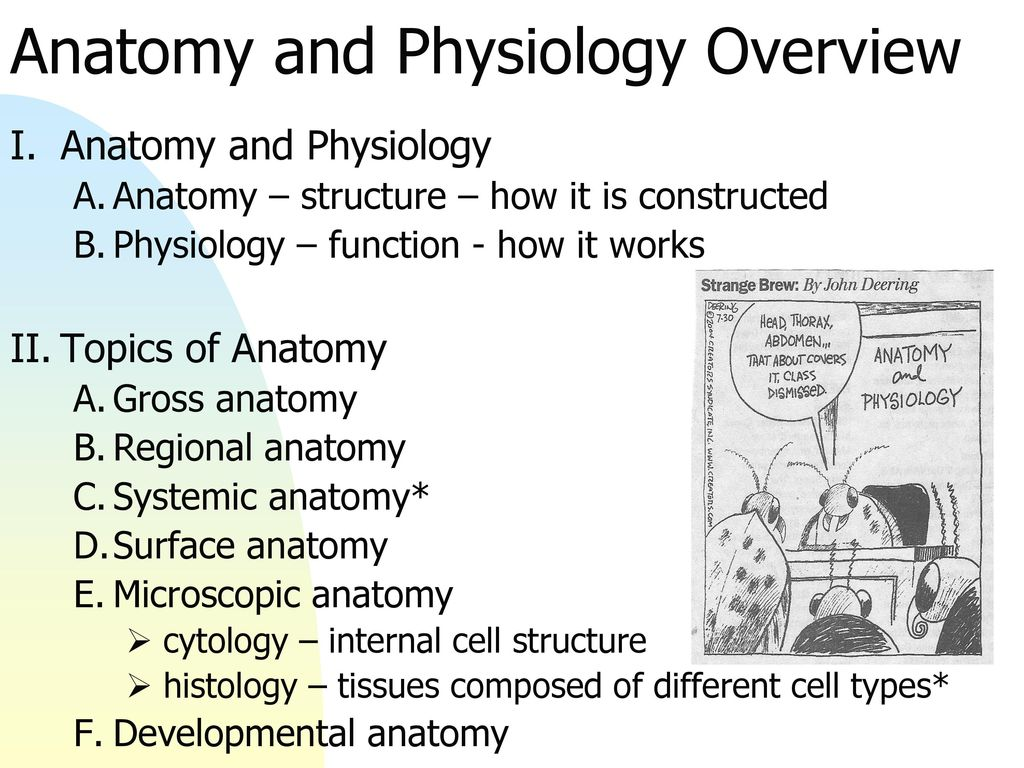 Dorable What Is The Difference Between Gross Anatomy And Microscopic ...