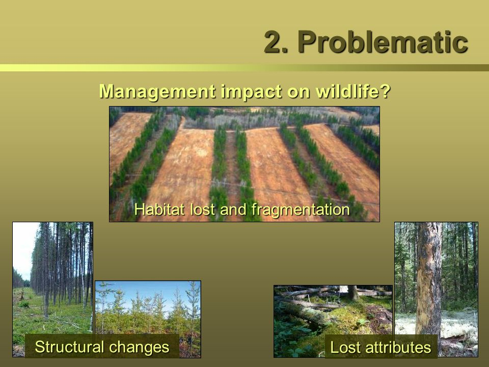 2. Problematic Management impact on wildlife