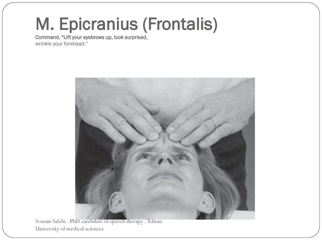 Fine Frontalis Gallery - Anatomy Ideas - yunoki.info