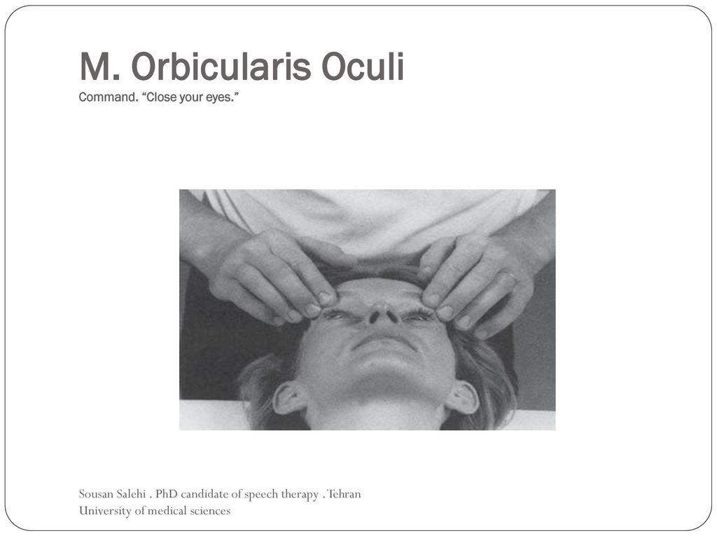 Schön Wo Die Orbicularis Oculi Liegt Ideen - Menschliche Anatomie ...