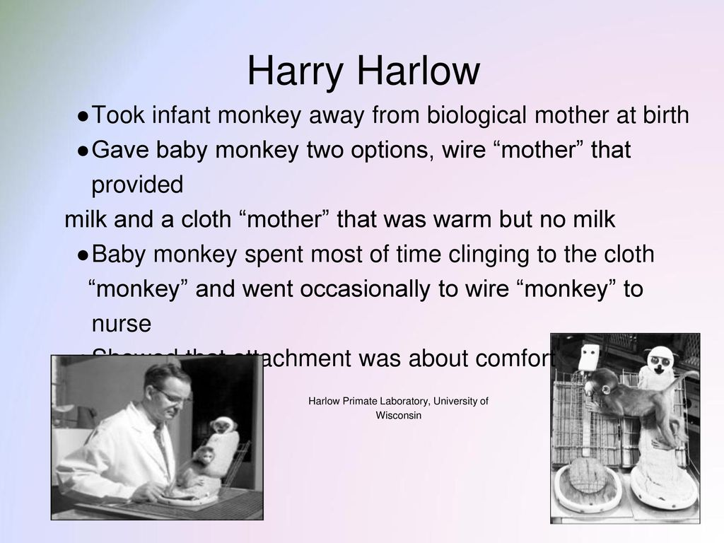 harlow experiment video