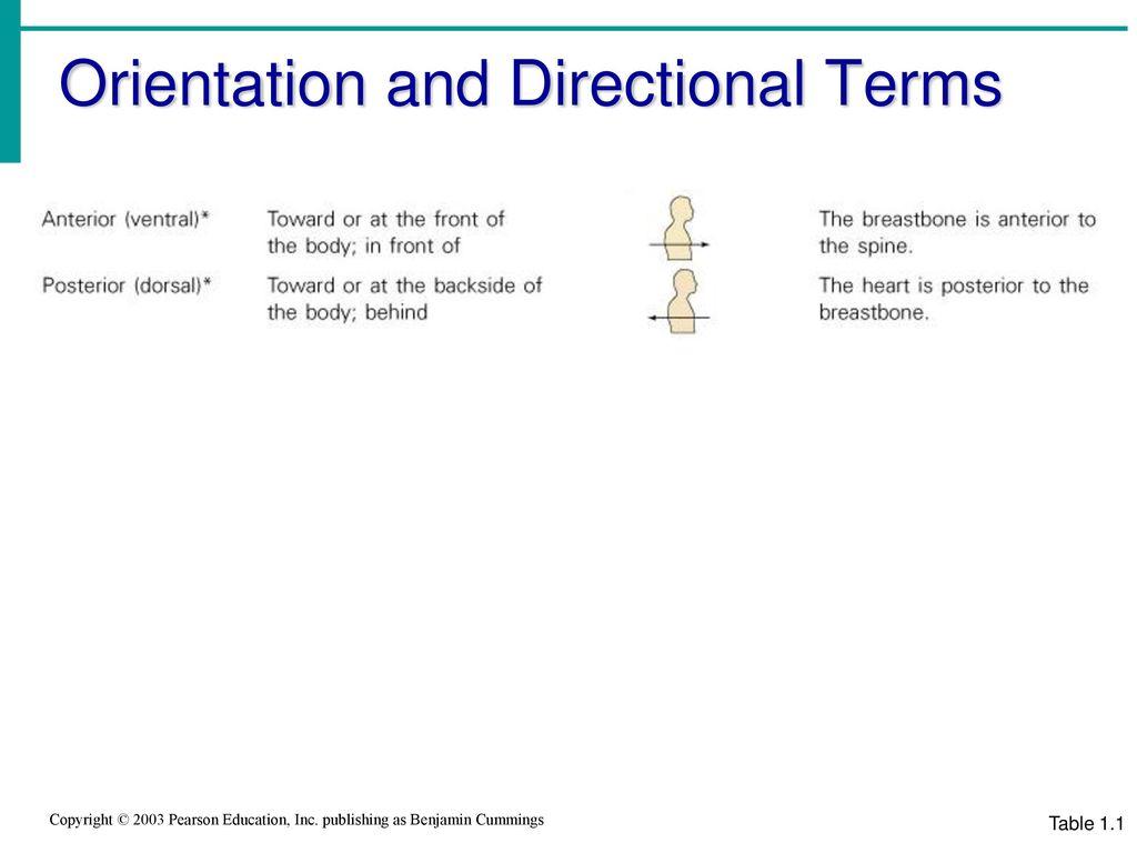 Amazing Anatomy Directional Terms Game Image - Anatomy and ...