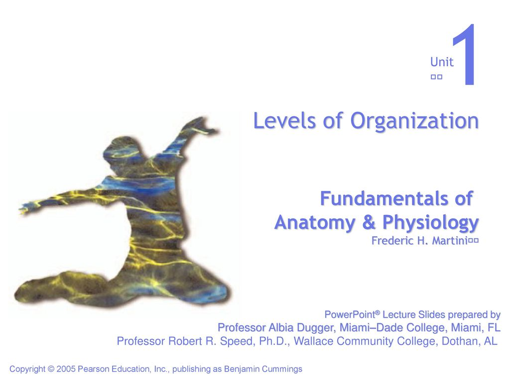 Dorable Fundamentals Of Anatomy And Physiology 3rd Edition Sketch ...