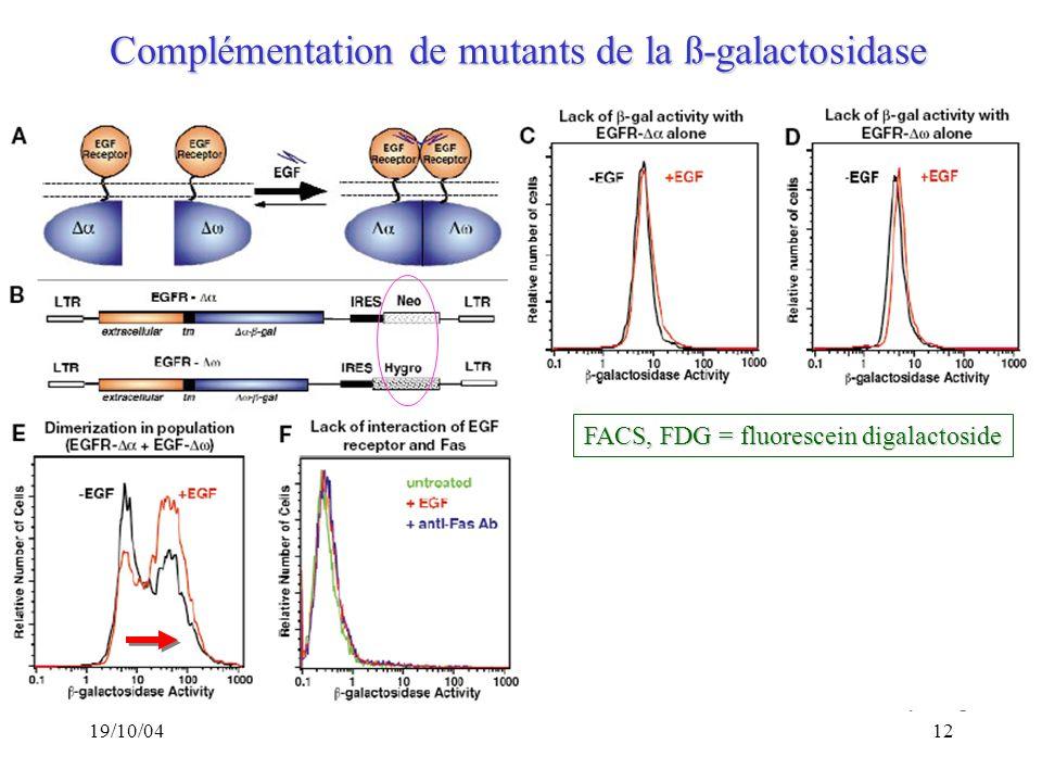 Complémentation de mutants de la ß-galactosidase