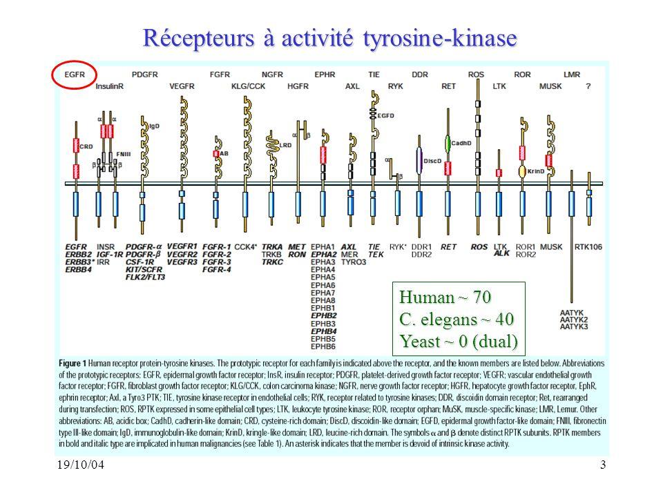 Récepteurs à activité tyrosine-kinase