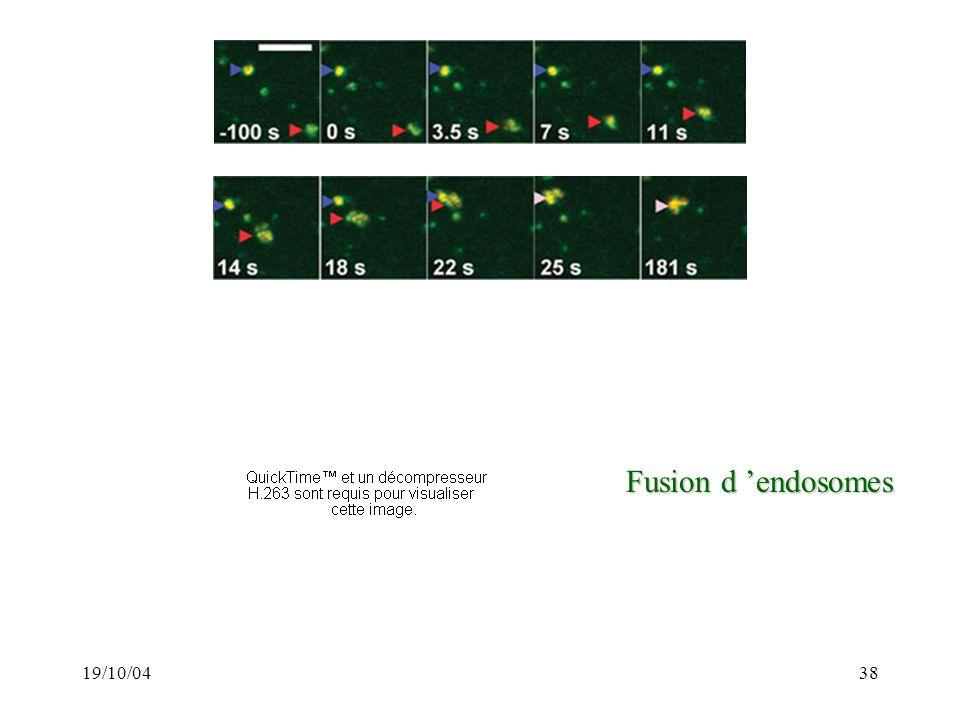 Fusion d 'endosomes 19/10/04