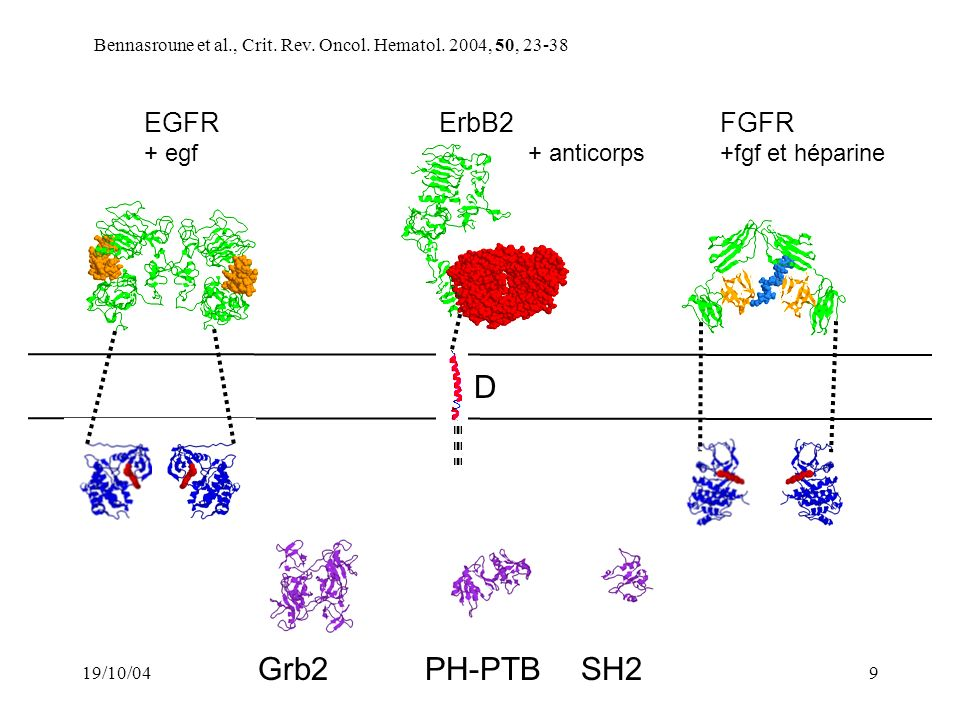 D Grb2 PH-PTB SH2 EGFR ErbB2 FGFR + egf + anticorps +fgf et héparine