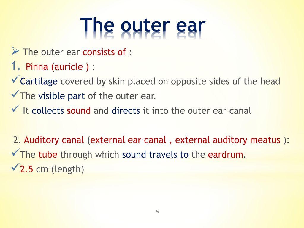 Old Fashioned Ear Pinna Anatomy Component - Anatomy Ideas - yunoki.info