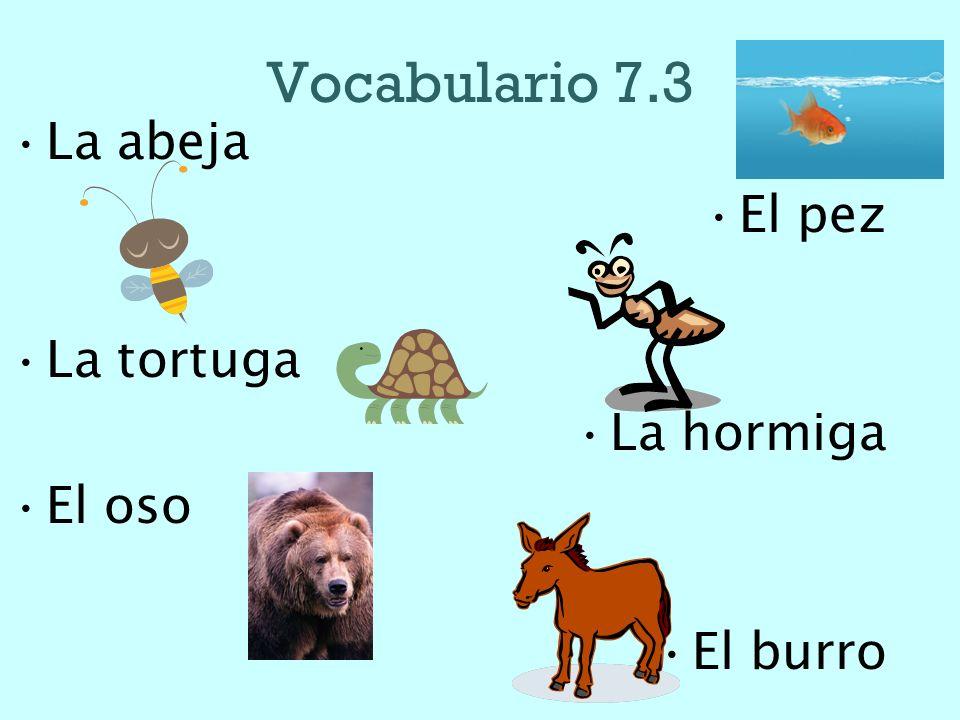 Vocabulario 7.3 La abeja El pez La tortuga La hormiga El oso El burro