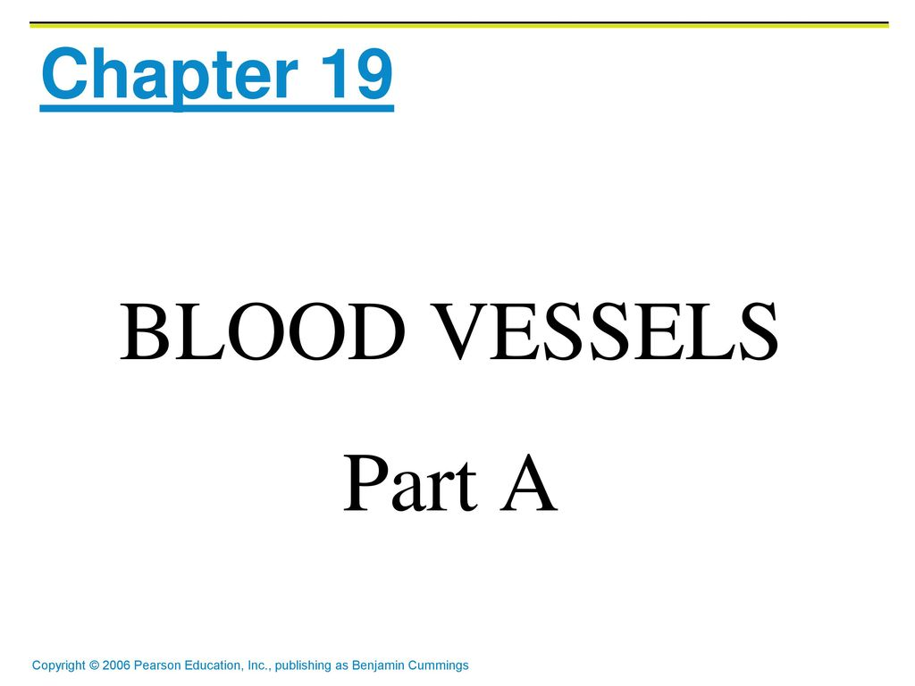 Fantastic Anatomy And Physiology Of Blood Vessels Picture Collection ...