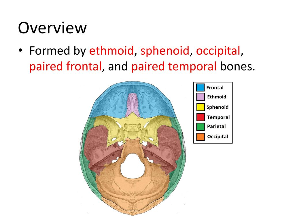 Awesome Sphenoid Ethmoid Composition - Anatomy Ideas - yunoki.info