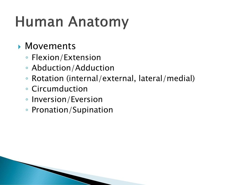 Perfect What Is Extension In Anatomy Crest - Physiology Of Human ...