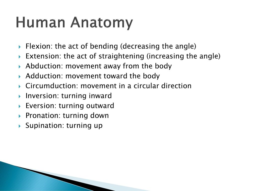 Funky What Is Circumduction In Anatomy Ideas Anatomy Ideas