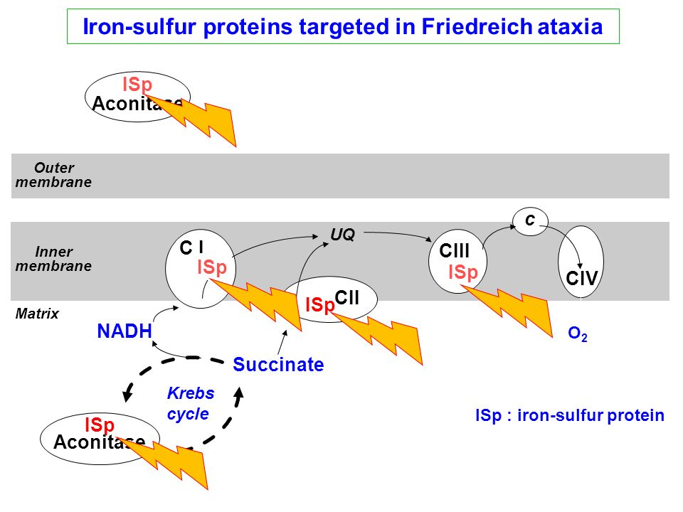Iron-sulfur proteins targeted in Friedreich ataxia