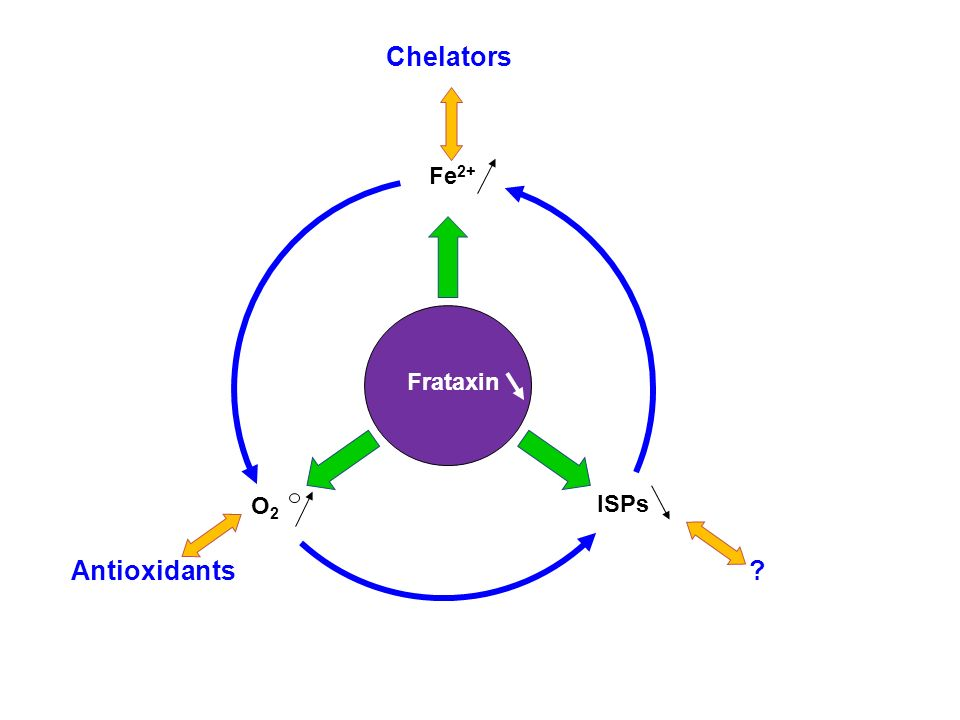 Chelators Fe2+ Frataxin O2 ISPs Antioxidants