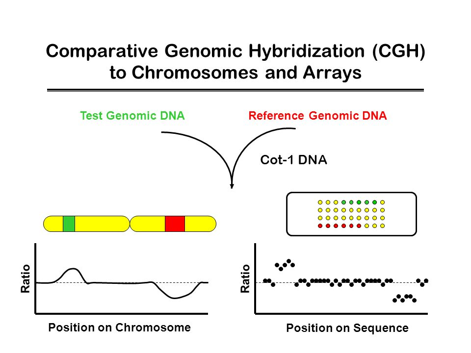 Comparative Genomic Hybridization (CGH) to Chromosomes and Arrays