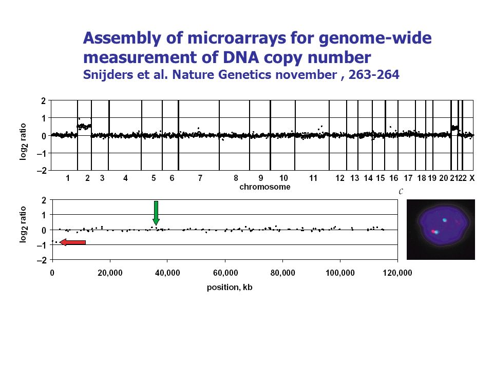 Assembly of microarrays for genome-wide measurement of DNA copy number