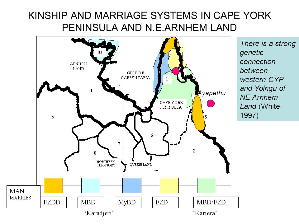 KINSHIP AND MARRIAGE SYSTEMS IN CAPE YORK PENINSULA AND N. E