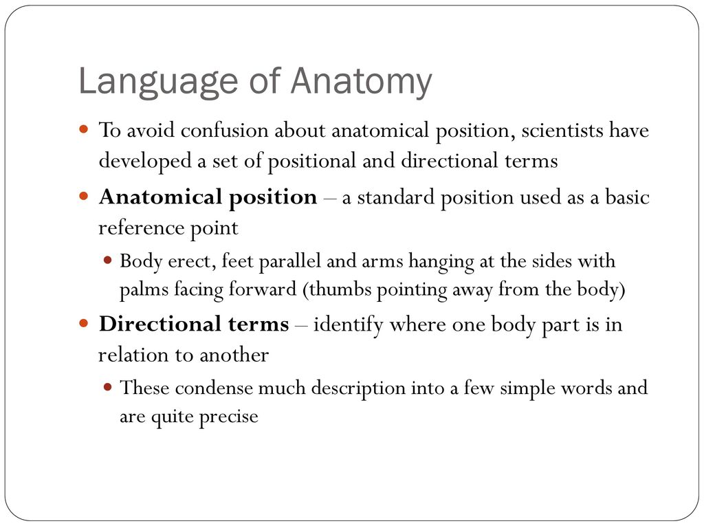Famous Terms Used In Anatomy Inspiration - Physiology Of Human Body ...