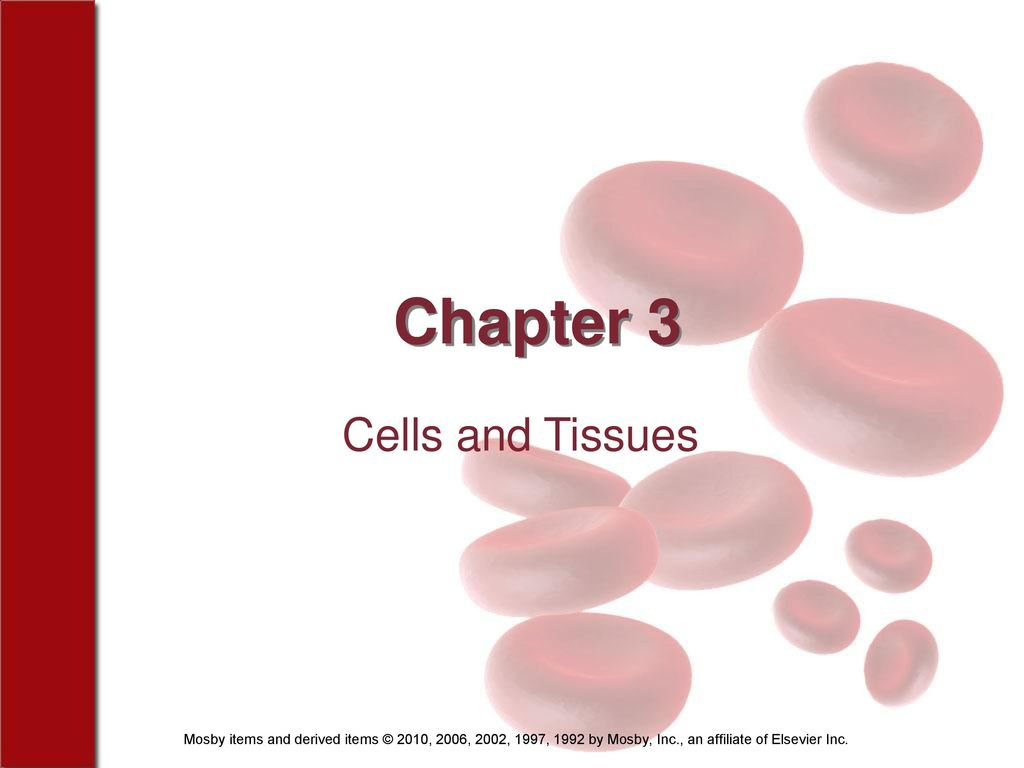 Erfreut Quizlet Anatomy And Physiology Chapter 3 Cells And Tissues ...