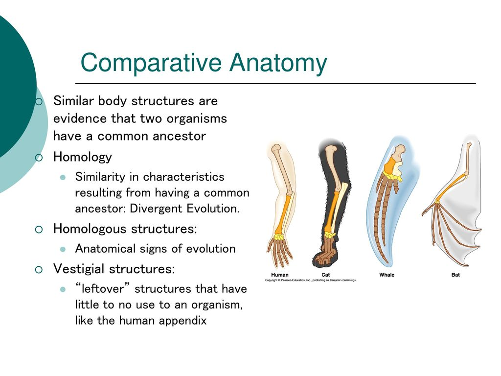 Colorful Comparative Anatomy Ppt Photos - Anatomy and Physiology ...