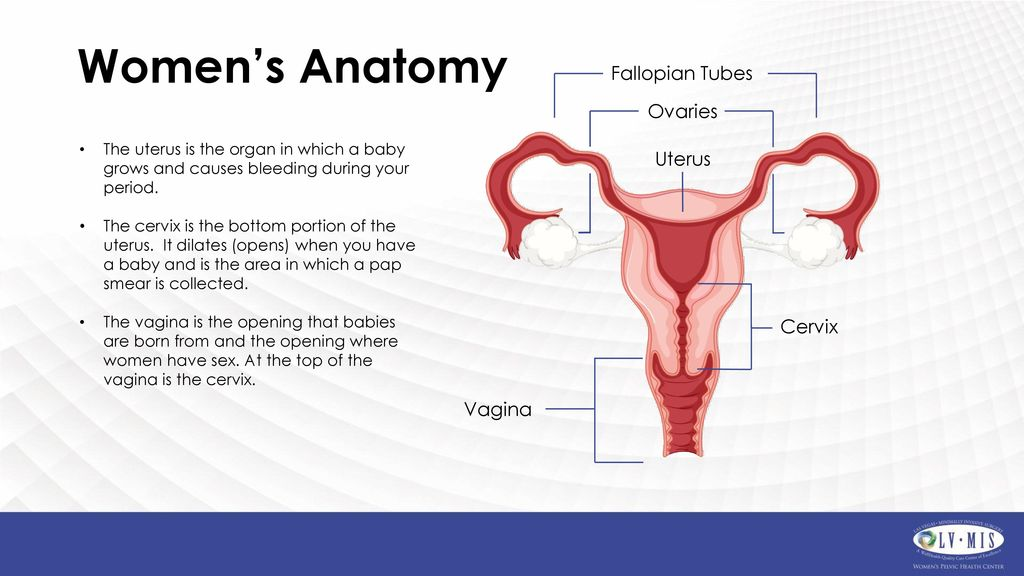 Old Fashioned Anatomy Of Cervix And Uterus Photos - Human Anatomy ...