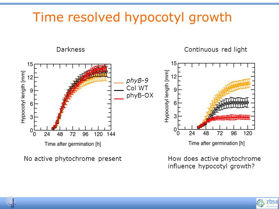 Time resolved hypocotyl growth