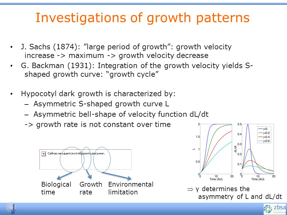 Investigations of growth patterns