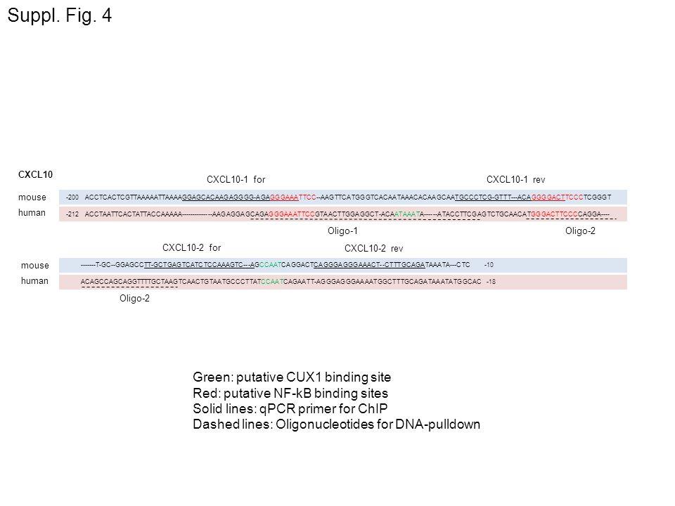 Suppl. Fig. 4 Green: putative CUX1 binding site