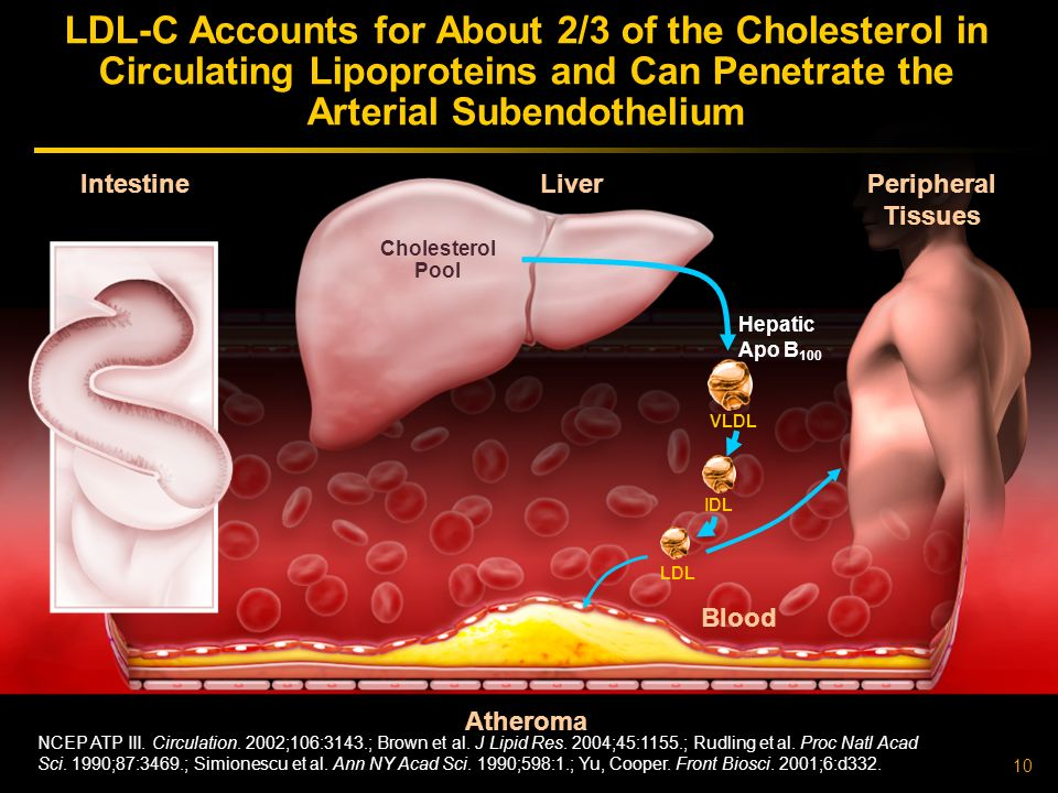 LDL-C Accounts for About 2/3 of the Cholesterol in Circulating Lipoproteins and Can Penetrate the Arterial Subendothelium