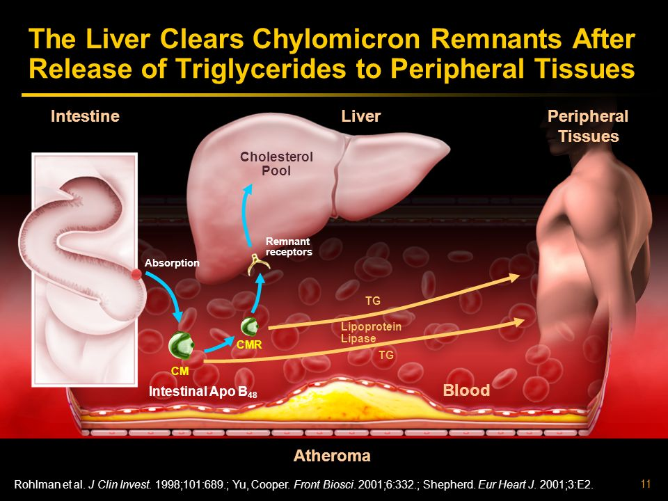 The Liver Clears Chylomicron Remnants After Release of Triglycerides to Peripheral Tissues