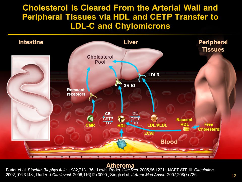 Cholesterol Is Cleared From the Arterial Wall and Peripheral Tissues via HDL and CETP Transfer to LDL-C and Chylomicrons