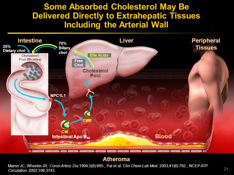 Some Absorbed Cholesterol May Be Delivered Directly to Extrahepatic Tissues Including the Arterial Wall