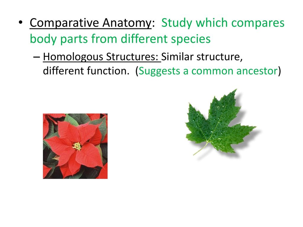 Amazing Comparative Anatomy Homologous Structures Component ...
