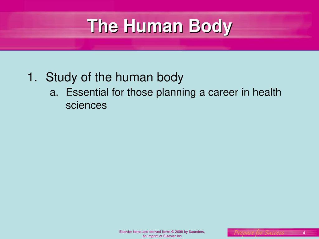 Careers In Human Anatomy Images - human anatomy diagram organs