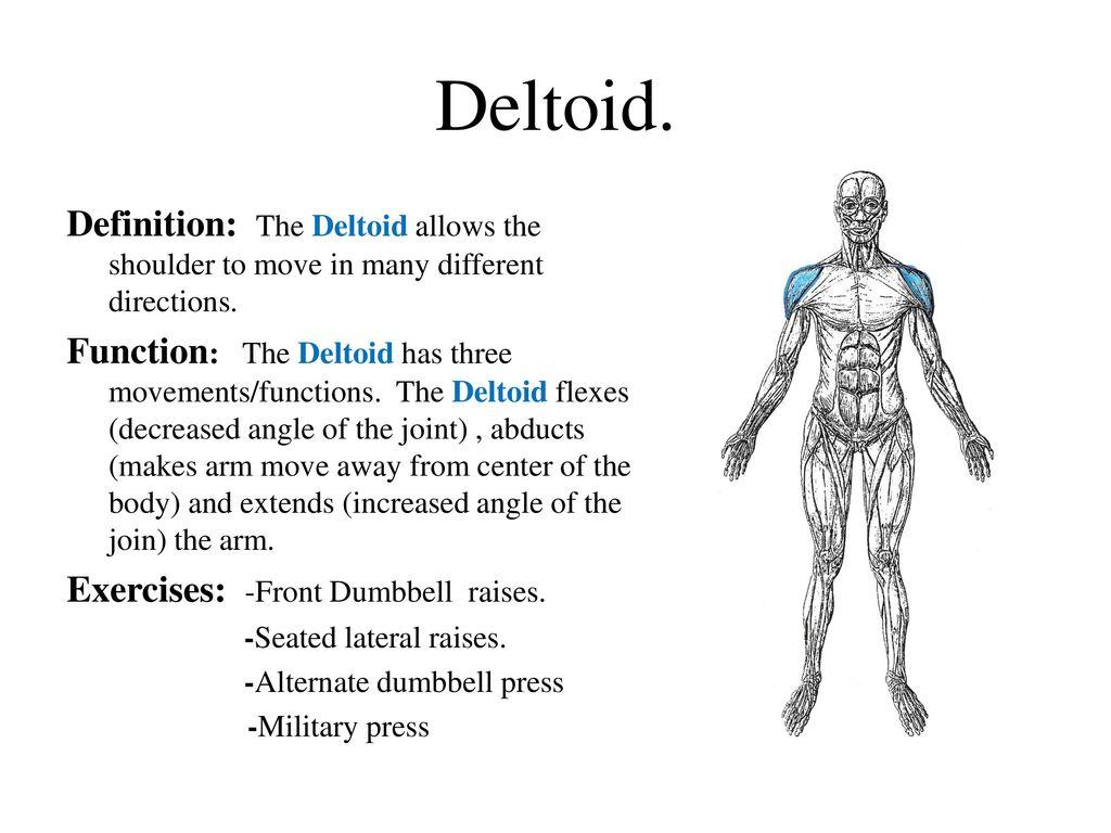 Niedlich Definieren Deltoid Bilder - Anatomie Von Menschlichen ...