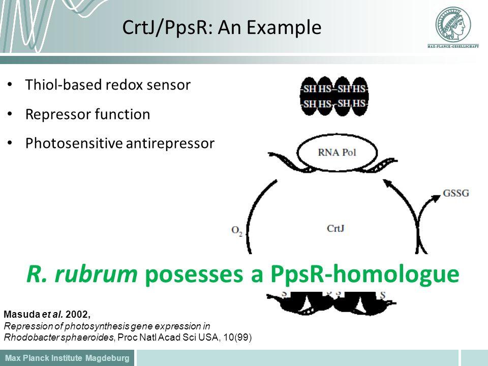 R. rubrum posesses a PpsR-homologue