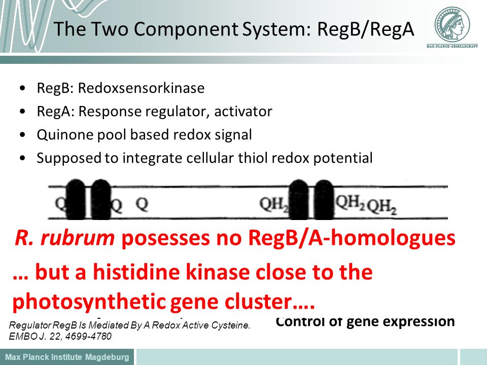 The Two Component System: RegB/RegA