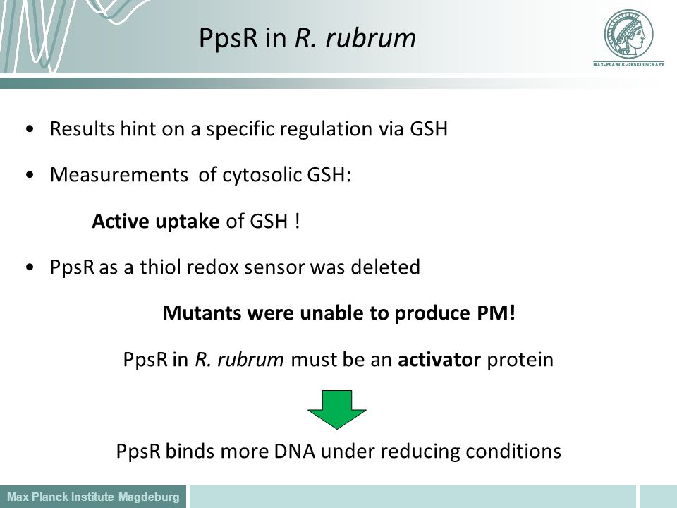 Mutants were unable to produce PM!