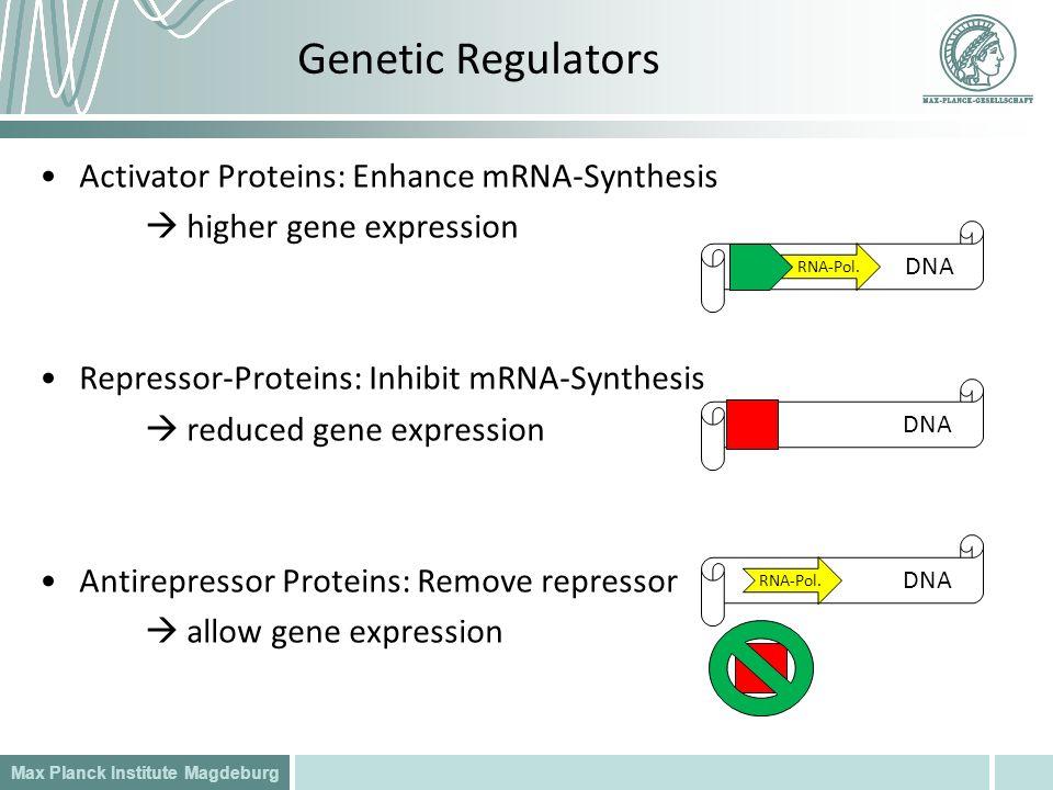 Genetic Regulators Activator Proteins: Enhance mRNA-Synthesis