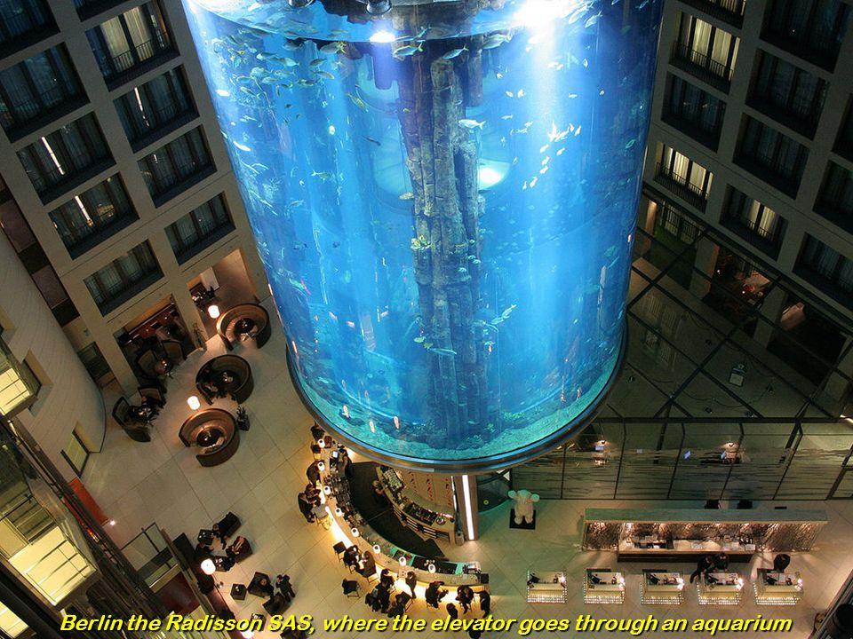Berlin the Radisson SAS, where the elevator goes through an aquarium
