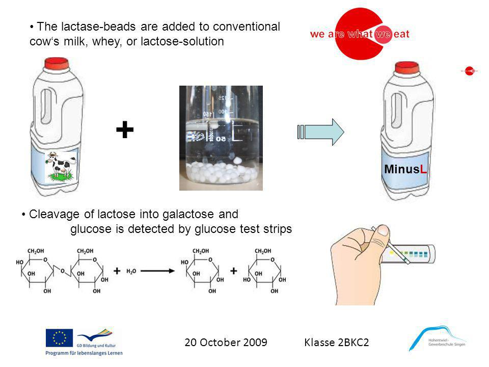 The lactase-beads are added to conventional cow's milk, whey, or lactose-solution
