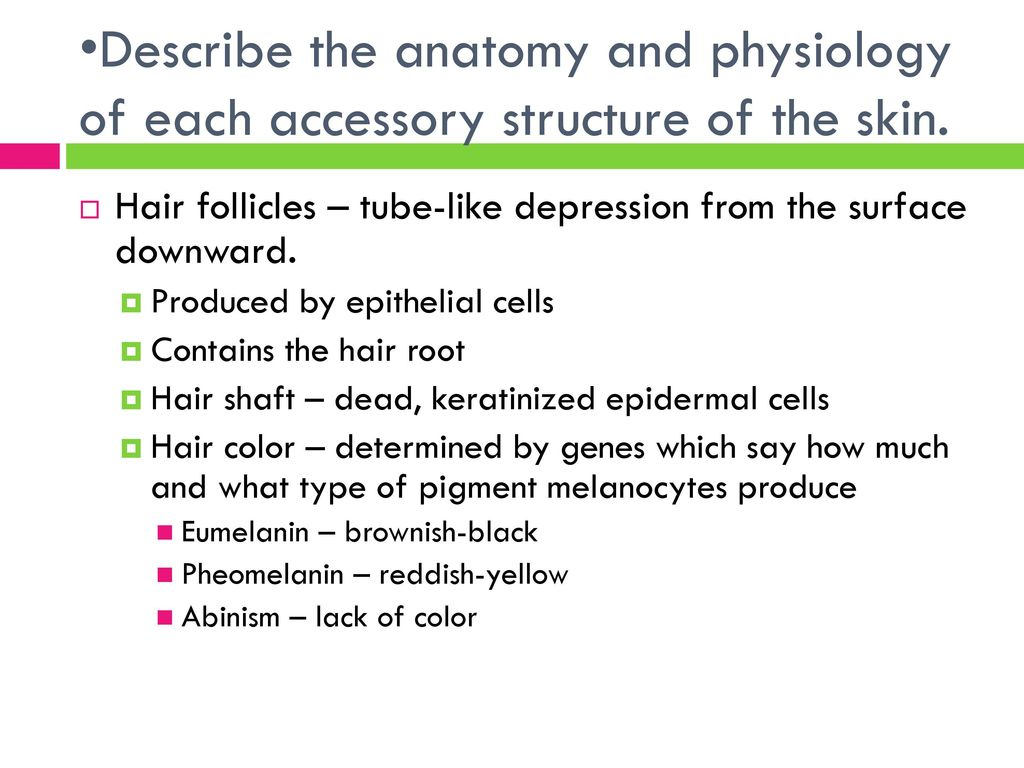Gemütlich Describe The Anatomy And Physiology Of Healthy Skin ...